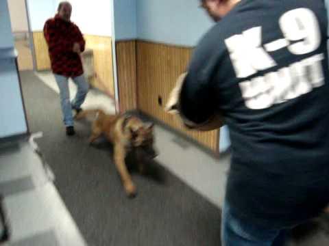 Police Dog For Sale - K9 Shadow protection slipper floor1.mpg