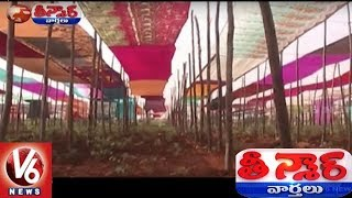 Anantapur Farmer Builds Saree Roof For Tomato Farm To Protect From Summer Heat | Teenmaar News