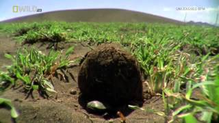 National Geographic Wild Worlds Weirdest Freaks Of Nature CONVERT HDTV XviD AFG