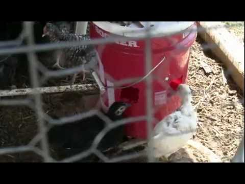 Chicken Waterer! How to build a simple automated chicken bucket watering system chicken waterer