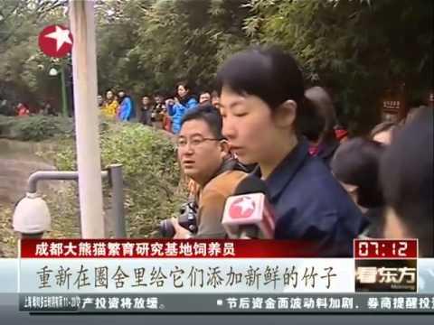四川熊貓嘉年華 熊貓寶寶萌翻遊客