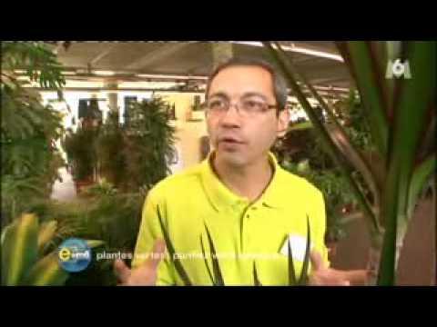 Plantes d polluantes m6 youtube for Plantes depolluantes