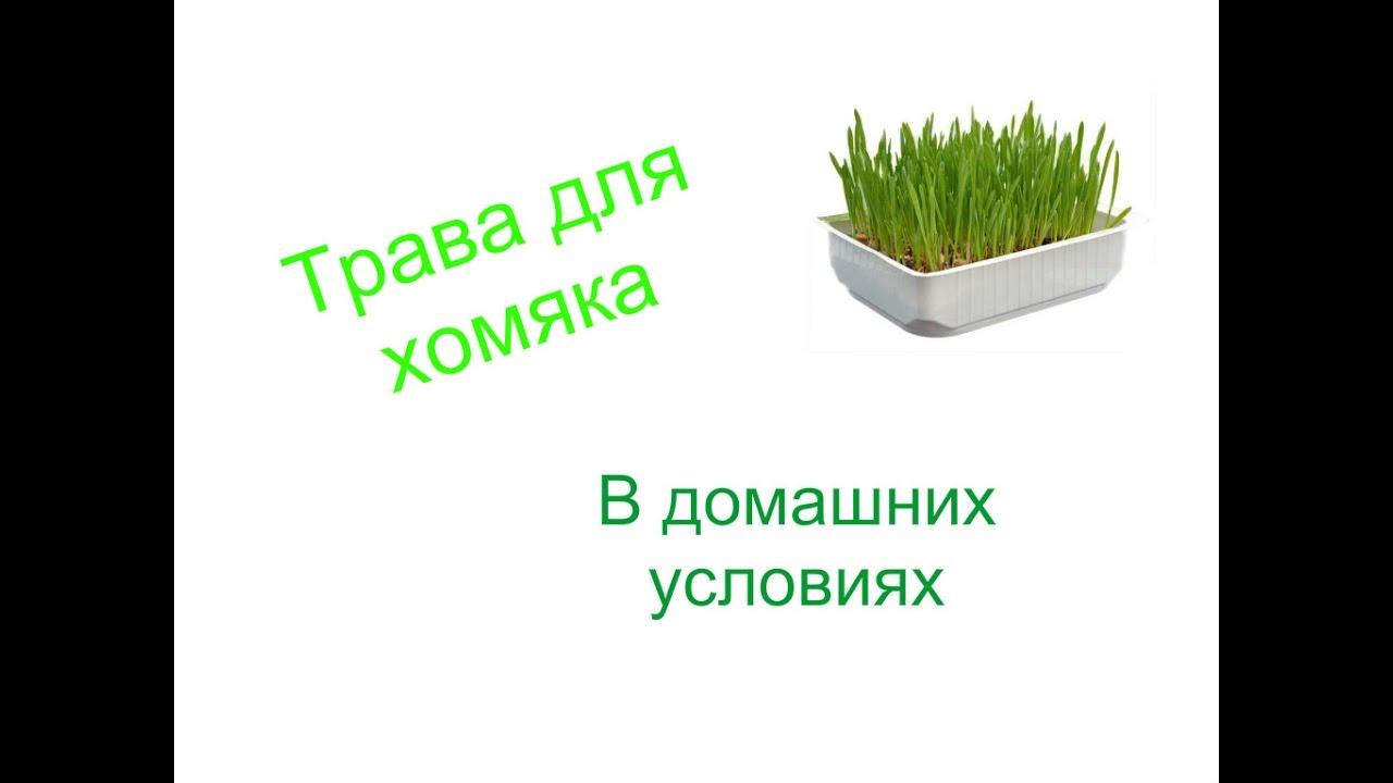 Как выращивать газон в домашних условиях 247