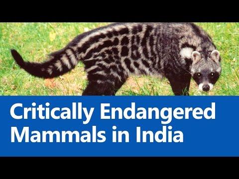 Critically Endangered Mammals in India (IUCN Red List) - Roman Saini [UPSC CSE/IAS Preparation]