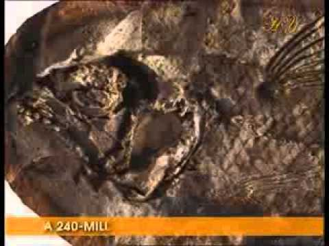 What are fossils and how do they form