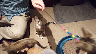 Alley To Attic Kittens Close-up Stream 8/7/17 Part 1