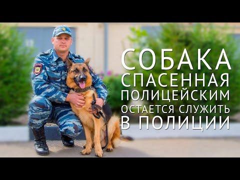 В Краснодарском крае собака, спасенная полицейским, остается служить в полиции