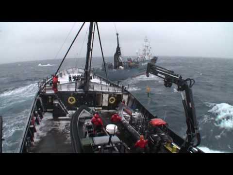 Operation Musashi - Chasing the Japanese Whaling Fleet