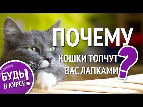 Почему кошка топчет вас лапками? Кошачий массаж: что это?