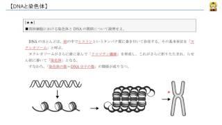 DNAと染色体
