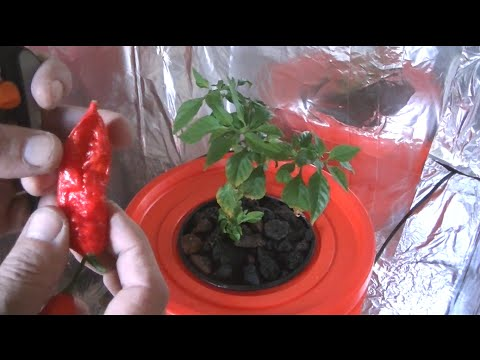 Homemade Hydroponic System, Self Contained With Lights