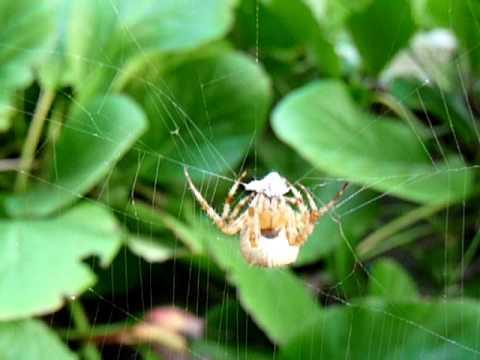 l attaque d une araign 233 e sur sa toile