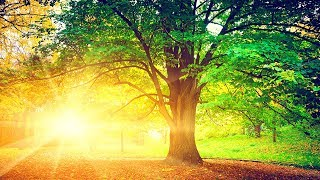 Relaxing Music, Reiki Healing Music, Meditation Music, Sleep Music, Calming Music, Zen Music, ☯1917