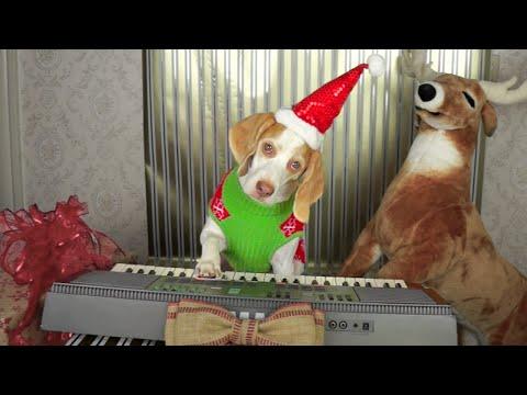 シュールな賢いピアノ犬♪
