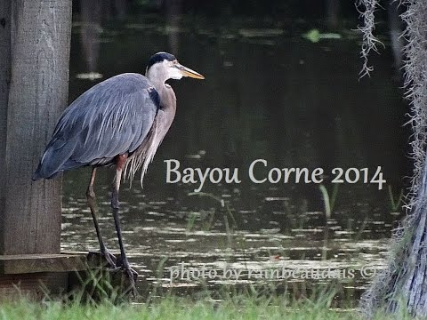Bayou Corne, Louisiana 2 Years Since The Sinkhole