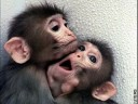 Cute Baby Monkeys!!!! - Monkey Day ecards - Events Greeting Cards