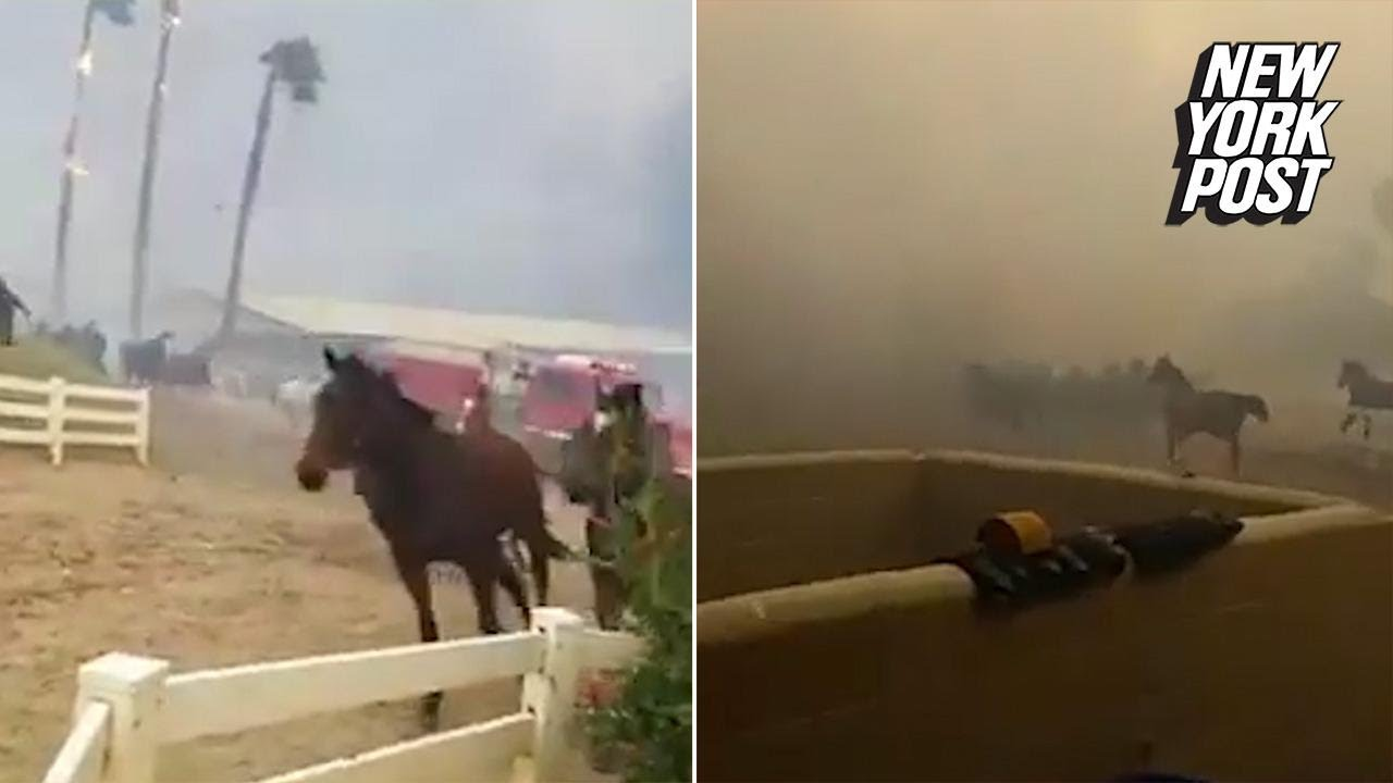 Dramatic video shows workers trying to save racehorses from blazing fires