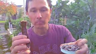 Raw Carob and Raw Cacao Comparison.  Raw Carob Pods and Powder Information