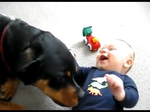 Baby Playing With ! Pit bull, Boxer, Doberman, Bull Terrier, Rottweiler, Collie, Retriever, Foxhound