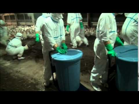 2105 HEALTH-BIRDFLU JAPAN