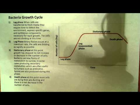 Bacteria Growth curve