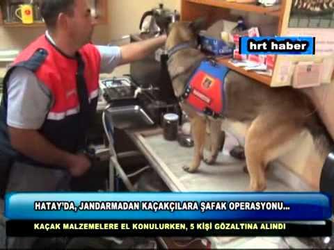 HATAYDA JANDARMADAN KAÇAKÇILARA ŞAFAK OPERASYONU...