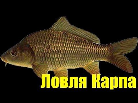 Русская Рыбалка 3.7,Ловля Карпа + Трофей !!!