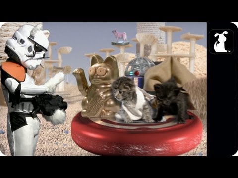Star Wars Parody - Paw Warz - Not the Toiz you're looking for - Petody