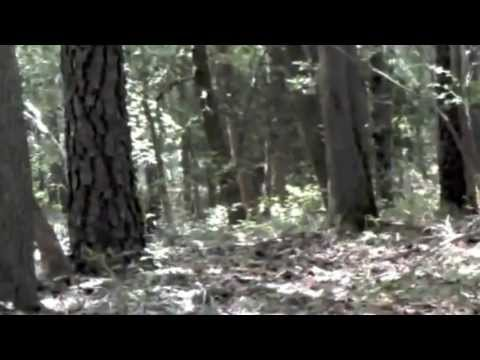 bigfoot compilation