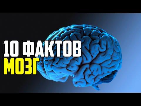 придется 10 фактов о мозге строма