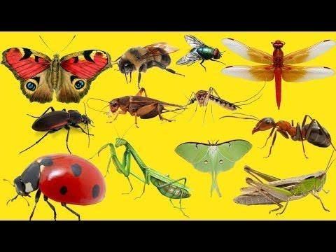 """Insects"". English for kids. Learn insects. Английский детям. Учим слова по теме "" Насекомые"