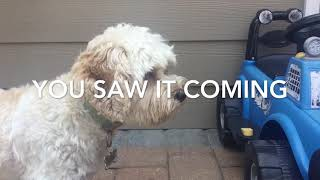 Dog can't cacth (fail compilation video)