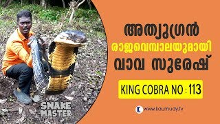 Wow! 13 feet long 113th King Cobra rescued | Vava Suresh | Snake Master | Latest episode