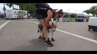 Best Dog Training in Columbus, Ohio! 1 Year Old Husky, Dakota!
