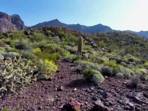 Hike to Mount Ajo via Bull Pasture, Organ Pipe Cactus National Monument 2013