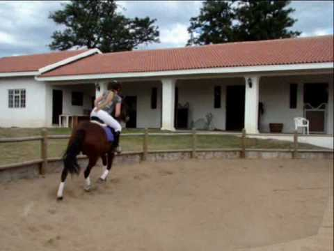*Flat work with Narnia* Video