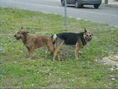 Dog sex video