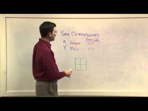 Biology 1107 - Gender Chromosomes