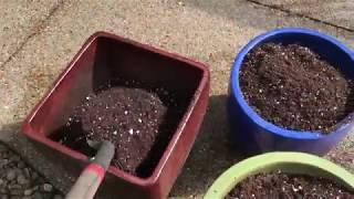 DIY Potting Soil: How to make homemade potting mix