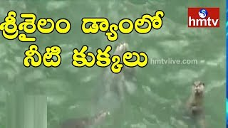 Strange Animals In Srisailam Dam