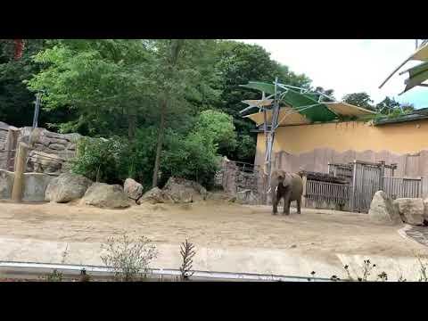 Der Baby Elefant von Schönbrun