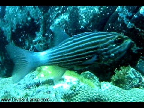 Beautiful Fishes In The Srilanka video