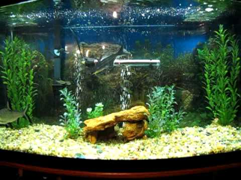 My 46 gallon bow front freshwater fish tank youtube for Bow front fish tank