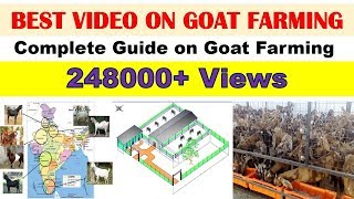 How to start goat farming? - Goat Farming in India, Livestock Production - 001