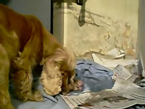 Nace un cachorro