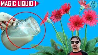 SECRET LIQUID FERTILIZER   See What Happens When You Use This Organic Fertilizer
