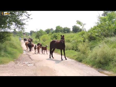 Swabi in Pakistan || The Land of Natural Beauty | Khyber Pakhtunkhwa