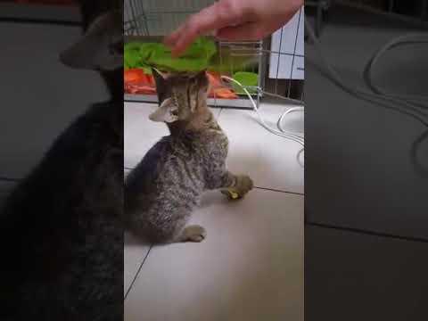 Potrącony kotek czeka na Waszą pomoc