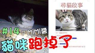 『貓咪跑掉了』MiMi醬的第二次流浪!自責的爸爸 Cat Story#14