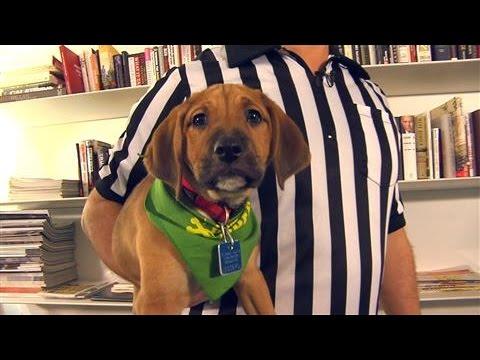 Animal Planet's 'Puppy Bowl XII' Stars Visit WSJ